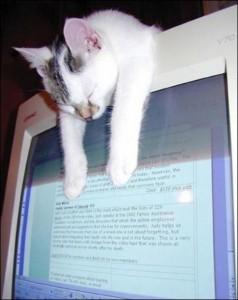 Gattino addormentato sul computer