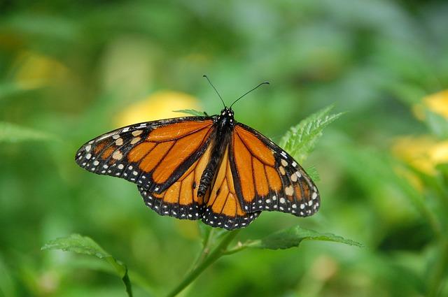 Le farfalle di Mario Quintana e quelle di Fabio Volo