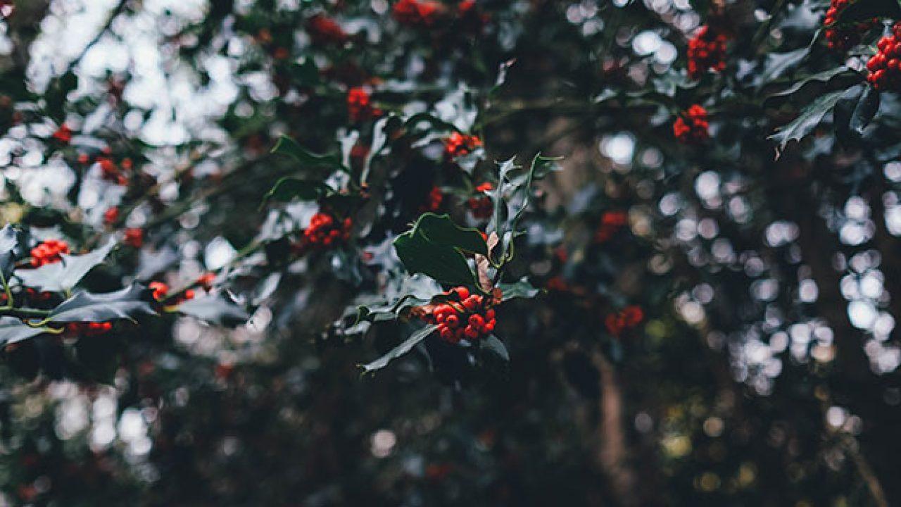 Auguri Di Buon Natale Yahoo.Frasi Di Natale Brevi Sms Per Gli Auguri Di Natalegraphomania
